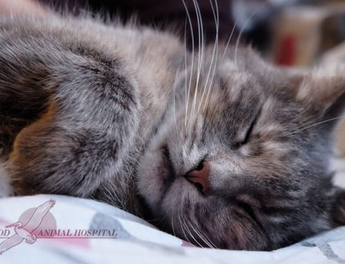 What To Know When Your Cat Needs Anesthesia
