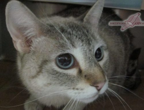 Cat Spaying & Neutering
