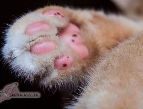 Declawing Cats: Examining the Pros, Cons and Alternatives